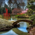 398px-japanese-hill-and-pond-garden-with-drum-bridge-inbrooklynbotanicusabybettycrockerwikimedia