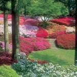 Градина с азалии