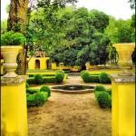 Жълта градина