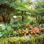 jardim_tropical