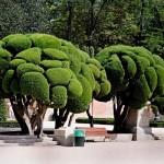 Резитба на дървета