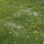 Цветя в тревна площ