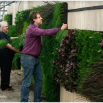 vertical-wall-planting