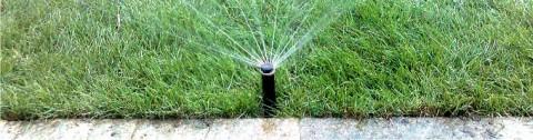 Напояване на тревен чим