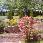 роза с алпинеум