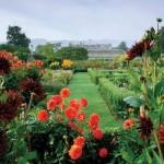 Градина с далии