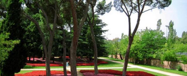 Цветна площ
