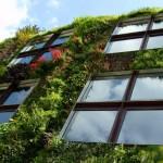 Озеленени прозорци